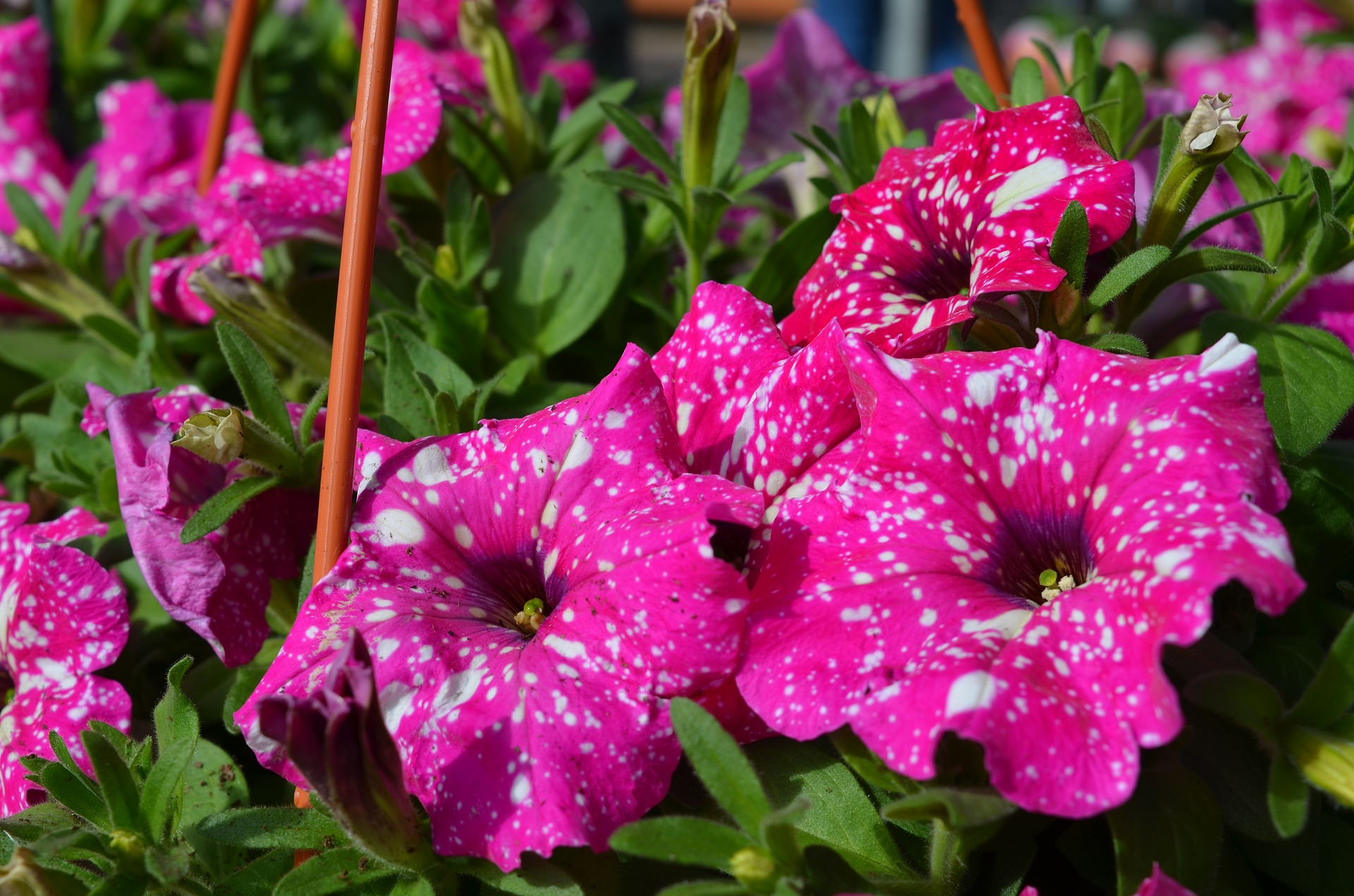 With gardening trends changing quickly, it feels impossible to keep up and one can easily get bored of the landscaping, plants, or general décor their garden seem to have.Here are some tips and tricks.