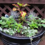 One-pot container gardens