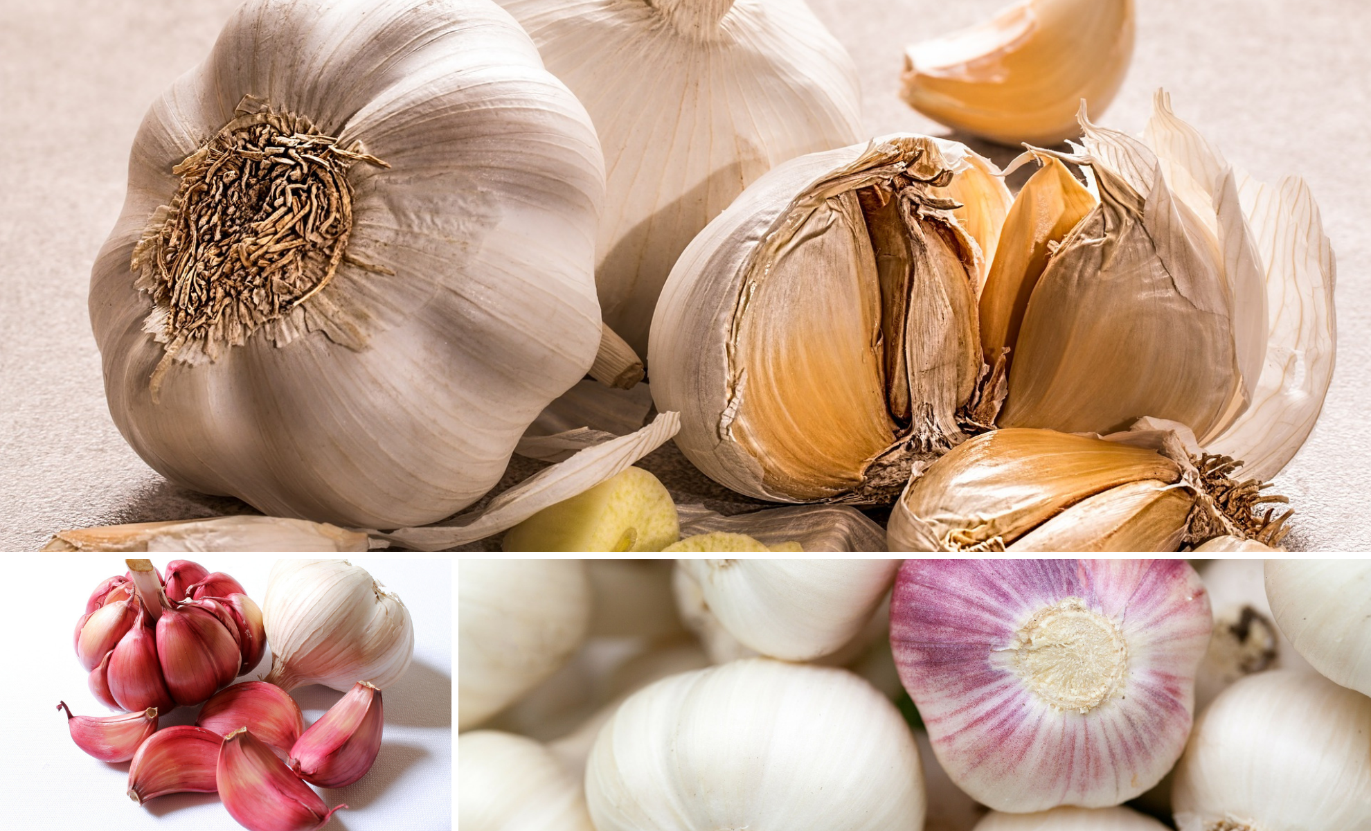 How to Crush, Smash and Chop Garlic