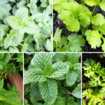 How to Grow Herbs in Pots and Containers at Home