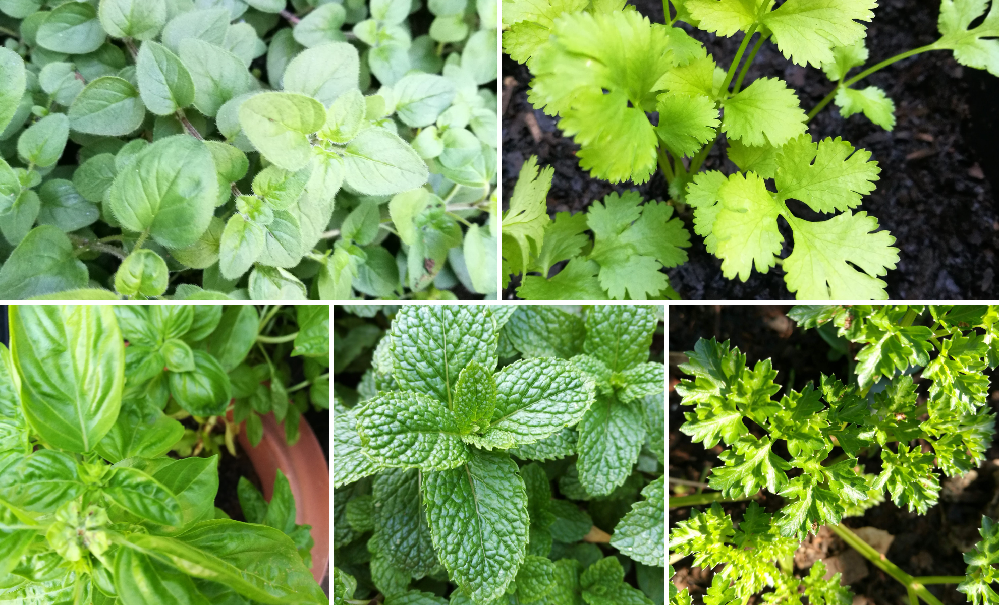 It is much easier than you think to grow herbs in containers and plant pots, both inside and out.