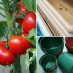 Growing Vegetables in Pots and Containers