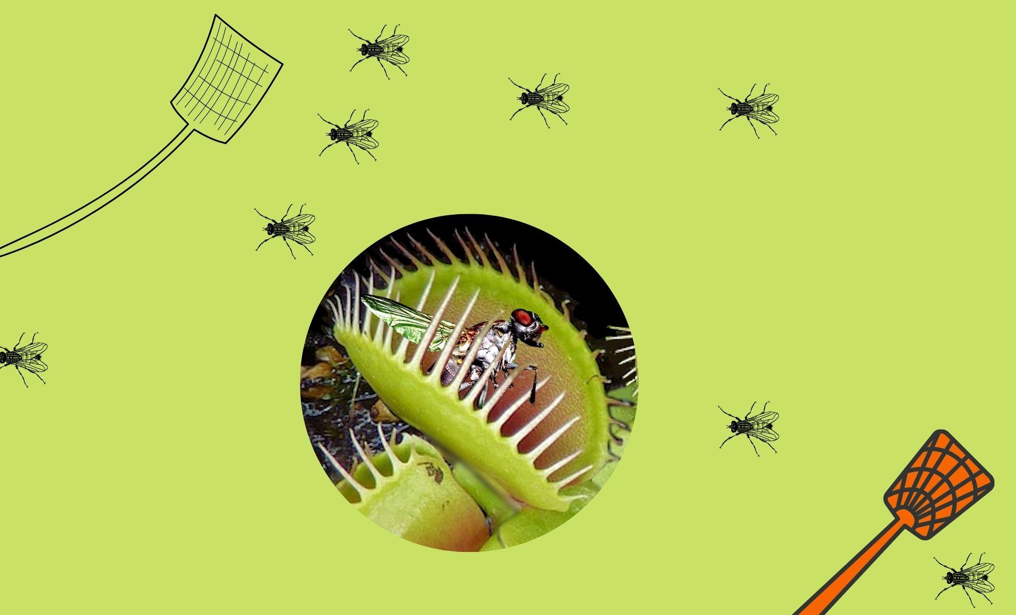 Some Natural Ways to Get Rid of Flies – DIY Tricks for the Home